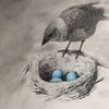Sketch drawing of cowbird looking in a robin's nest